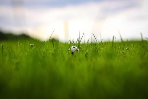 pronostici online, giochi online, scommesse sportive